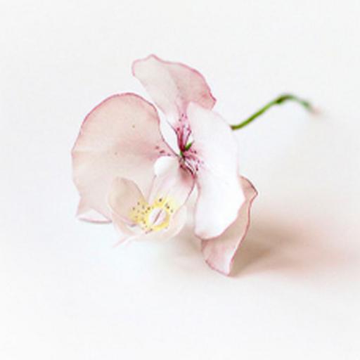 Сахарные цветы 4 июля